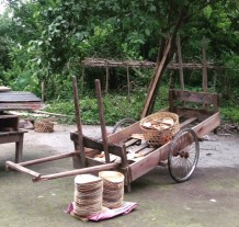 Tambul, a generous tree in the northeast, generates rural employment