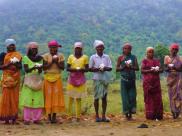 Mandala farmers