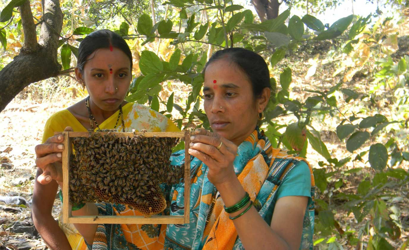 Cross pollination improves crop yield and involves more female famers