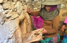 Making a living in the Himalayas