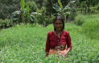 Natural dyes from the Himalayas create jobs for women
