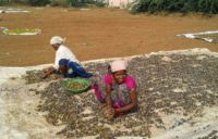 Sweet oranges source of income for rural women