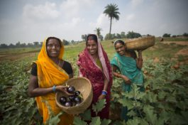 Reinventing the vegetable supply chain