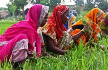 Female farmers benefit from Jugaad