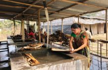 Palm tree provides income to rural women in Northeast