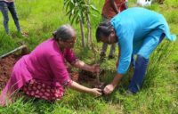 Planting saplings to compensate global footprint