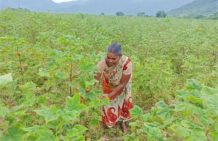 Regenerative farming increases income Manchala Gangamma
