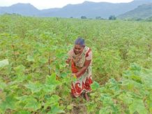 Regenerative farming increases income Manchala Gangamma