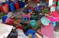 Meira Foods continues mango processing despite peak COVID-19